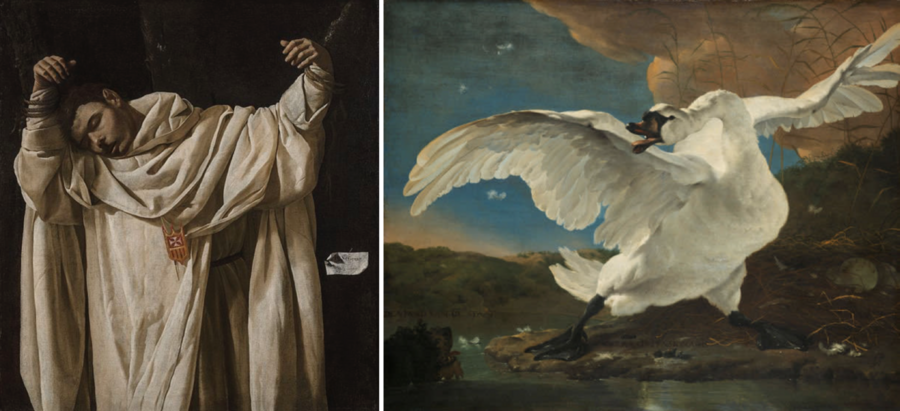 Francisco de Zurbarán's, The Martyrdom of Saint Serapion is paired up with Jan Asselijn's The Threatened Swan; both of them have visual similarities in terms of posture. Photo Credit: MIT.